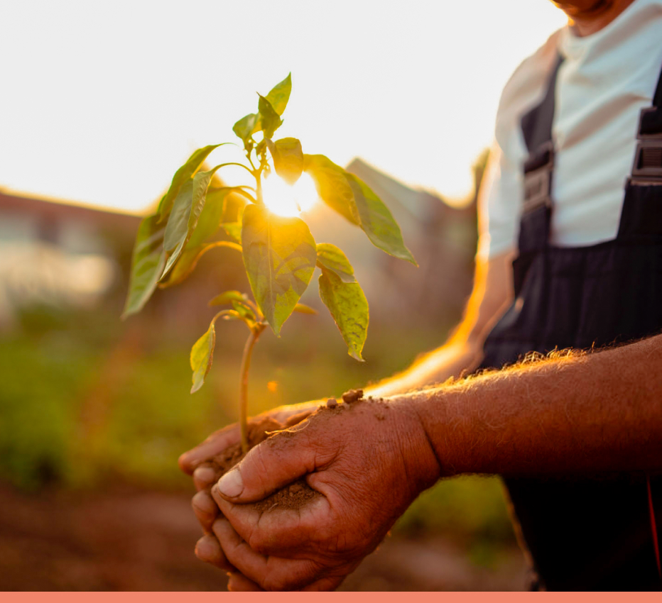 saúde para quem consome e auxílio para quem produz